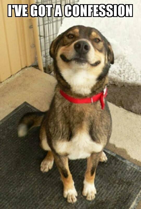 confession dog