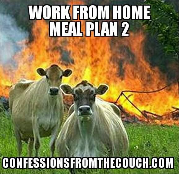 angry cows
